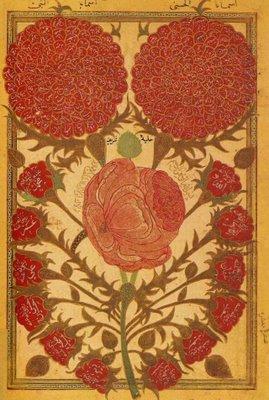 The Rose of Muhammad (sallallahu alaihi wasallam)   Ruh al Haq